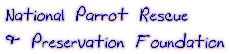 National Parrot Rescue & Preservation Foundation